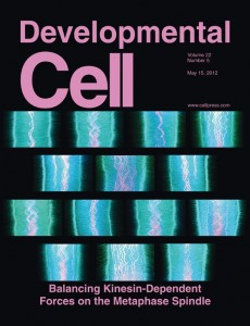 On the cover: Kymographs of deconvolution microscopy images display microtubules in metaphase with EB3 (cyan) on polymerizing microtubule tips and CENP-B (magenta) on oscillating mitotic centromeres in control, Kif18A-, Kid-, or Kif4A-depleted HeLa cells.